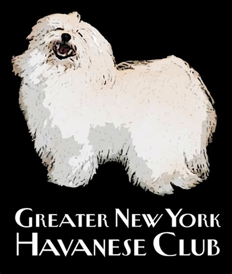 havanese club greater new york havanese club havanese puppies and breeder advice