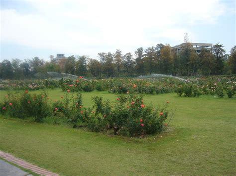file garden chandigarh inida 3 jpg