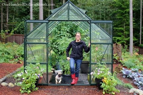 can i build a greenhouse in my backyard growing vegetables in a greenhouse harvesting tomatoes