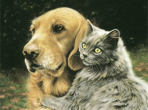 Cat And Dog5 Komik kedi ve k 246 pek t 252 y 252 insanlara zarar verir mi