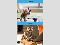 Then vs Now: How Cats' Lives Changed Because Of Technology ... Feeling Bad For