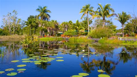 Naples Fl Botanical Garden Naples Botanical Garden In Naples Florida Expedia