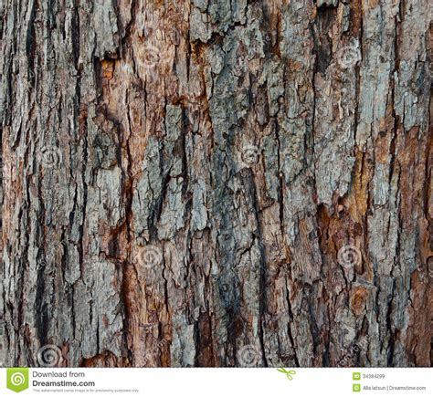 skin the color of bark the texture of tree bark up stock image image of