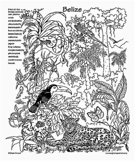 free tropical rainforest coloring pages tropical free