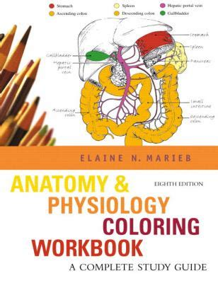 anatomy and physiology coloring workbook answers reproductive system buy new used books with free shipping better