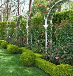 kletterhaus garten 25 best ideas about california garden on