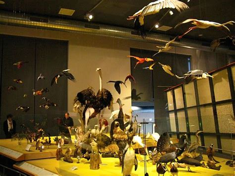 amsterdam museum of natural history national museum of natural history naturalis leiden
