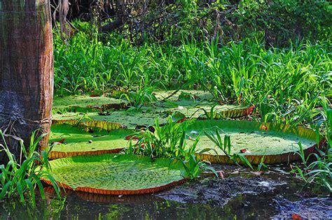 can you buy plants on amazon amazon rainforest natureflip