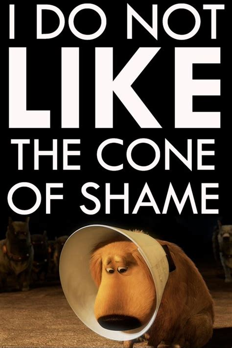 Cone Of Shame Meme - cone of shame bing images