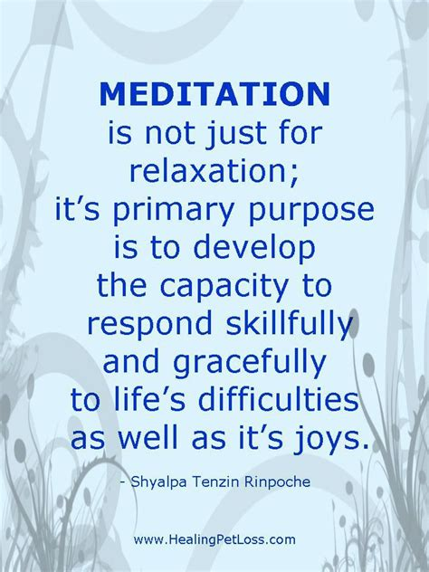 healing pet loss meditation series meditation quotes