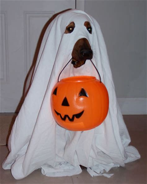 ghost puppy 5 easy diy pet costumes you could create in your sleep petslady