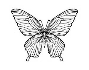 desenho borboleta tropical colorir colorir