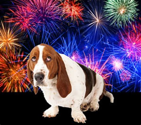 afraid of fireworks fireworks fear in dogs