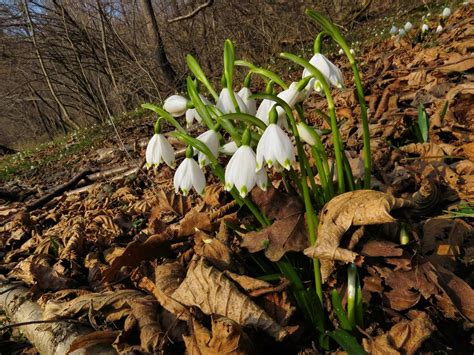 fiori della primavera fiori della primavera forum natura mediterraneo forum