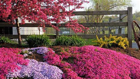 piante e fiori perenni agricola le perenni precoci