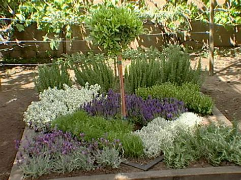 herb garden plants how to make an herbal knot garden how tos diy