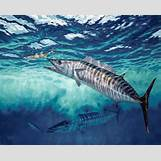 White Marlin Jumping | 460 x 369 jpeg 52kB