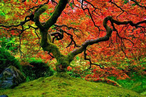 imagenes de otoño en japon el oto 241 o en imagenes taringa