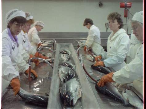 anzug stock videos framepool rightsmith stock footage fischverarbeitung fischfabrik norwegen videokollektion