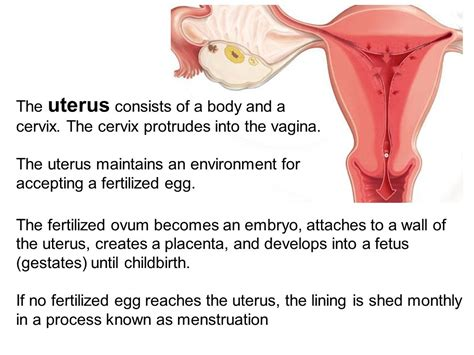 Uterus Wall Shedding by 100 Shedding Of Uterine Lining 5 Signs From Your