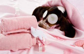 spa city puppies paws grooming spa home