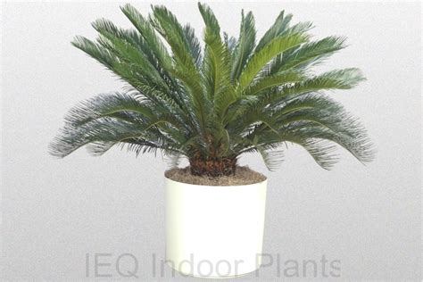 low light indoor trees smart and simple indoor plants low light placement