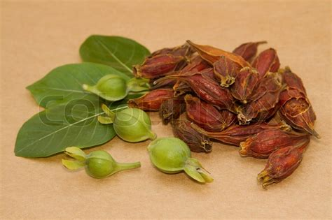 Gardenia Fruit Dried Gardenia Fruit Dried Gardenia Fruit Used In
