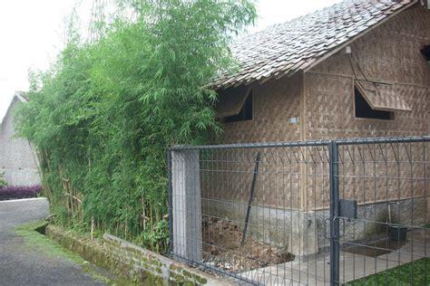 membuat rumah jamur saung suung farm budidaya jamur tiram putih