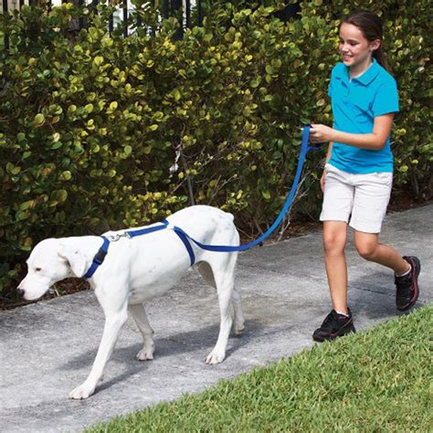 stop from pulling on leash instant trainer leash 30 lbs stop pulling walk alex nld