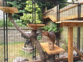 Home And Design Show Edmonton awesome large diy backyard cat enclosure cuckoo4design