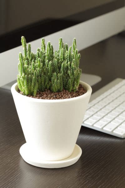 Plant For Office Desk Desk Plant Maintenance Helpful Tips To Care For Plants