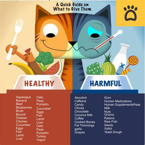 can you feed a cat food what human foods cats can can t eat searching for a healthy snack for your cat