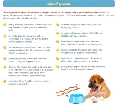 signs of poisoning in dogs 17 best images about cutsey animals on cats pet beds and beds