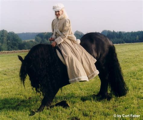 pferd liegen beibringen zirzensik was ist das zirzensische lektionen sind