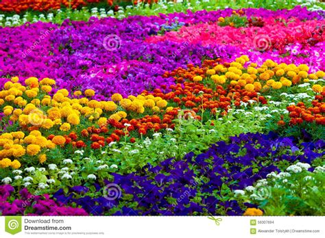color of field of flowers of different colors stock photo image