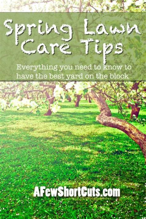 spring landscaping tips 1000 ideas about lawn care tips on pinterest lawn lawn
