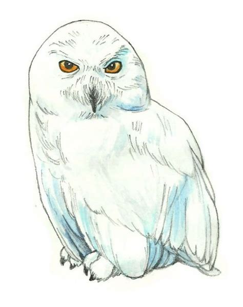 harry potter coloring book hedwig how to draw hedwig from harry potter