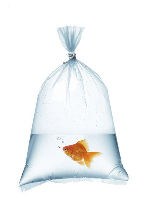 Aquascaping Rocks Yfs Fish Food Plastic Fish Shipping Bag 8 Quot X 20 Quot