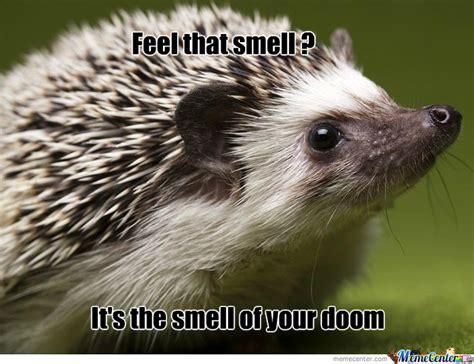 Hedgehog Meme - evil hedgehog by hedgehog lover meme center