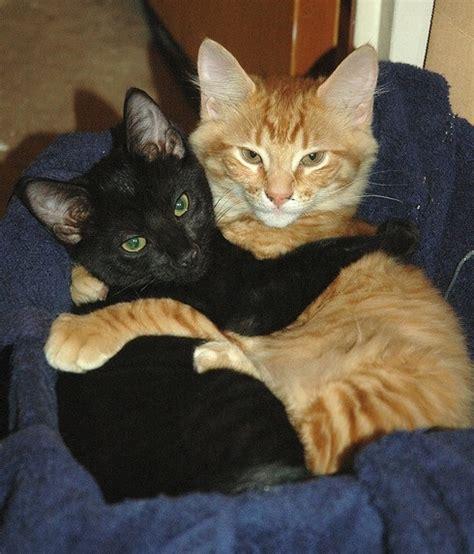 cat hugs 15 sweetest cat hugs