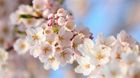 Blume Mit Weißer Blüte by Die 57 Besten Blumen Hintergrundbilder F 252 R Pc
