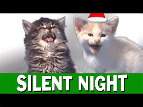 jingle cats silent night youtube
