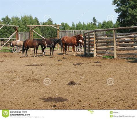 fotos de nenas mamando a caballos cavalos do rancho fotos de stock imagem 9643323