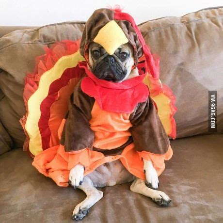 can pugs eat cheese 1000 ideas about thanksgiving on turkey jokes thanksgiving quotes