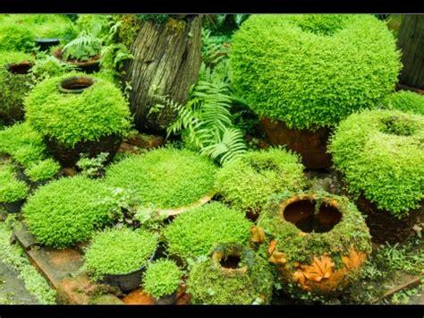 image gallery moss garden