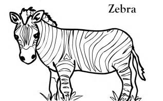 zebra color free printable zebra coloring pages for