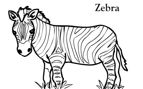printable zebra pics free printable zebra coloring pages for kids