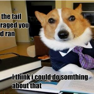 Lawyer Dog Meme - lawyer dog meme pictures to pin on pinterest pinsdaddy