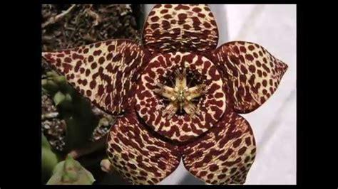 foto di fiori strani mix dei fiori pi 249 strani e belli pianeta curiosita