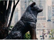 In Japan, his statue at Shibuya Station is still a popular ... Hachiko Movie